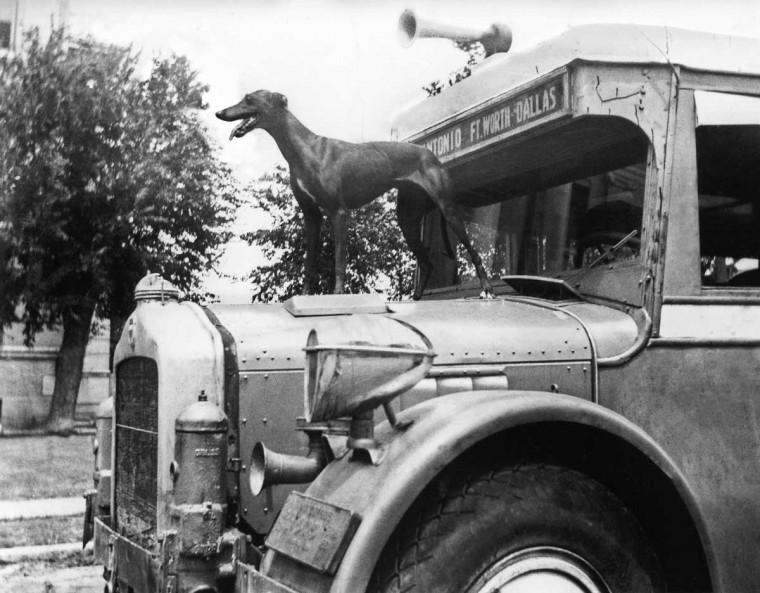 Historical old antique Greyhound Bus
